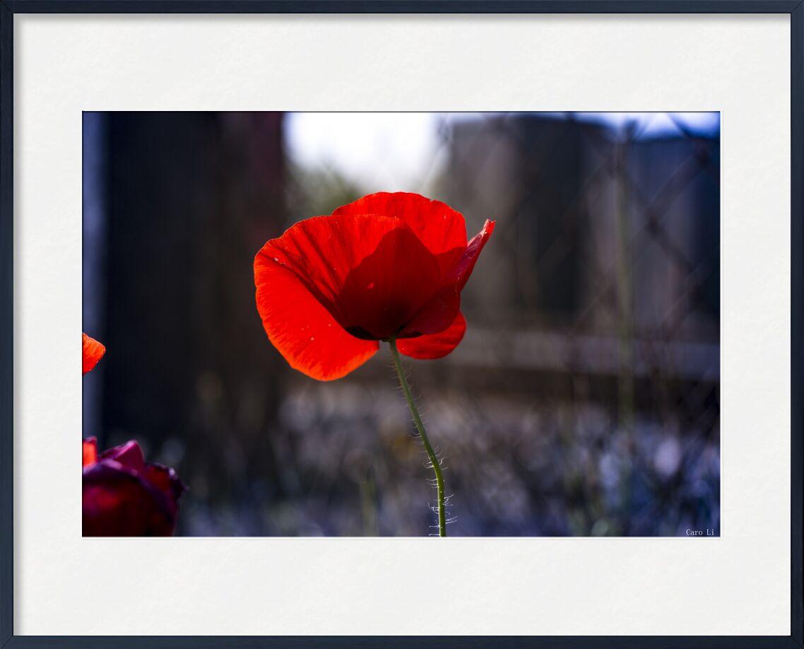 Tulipe de Caro Li, Prodi Art, nature, fleur, fleur, tulipe