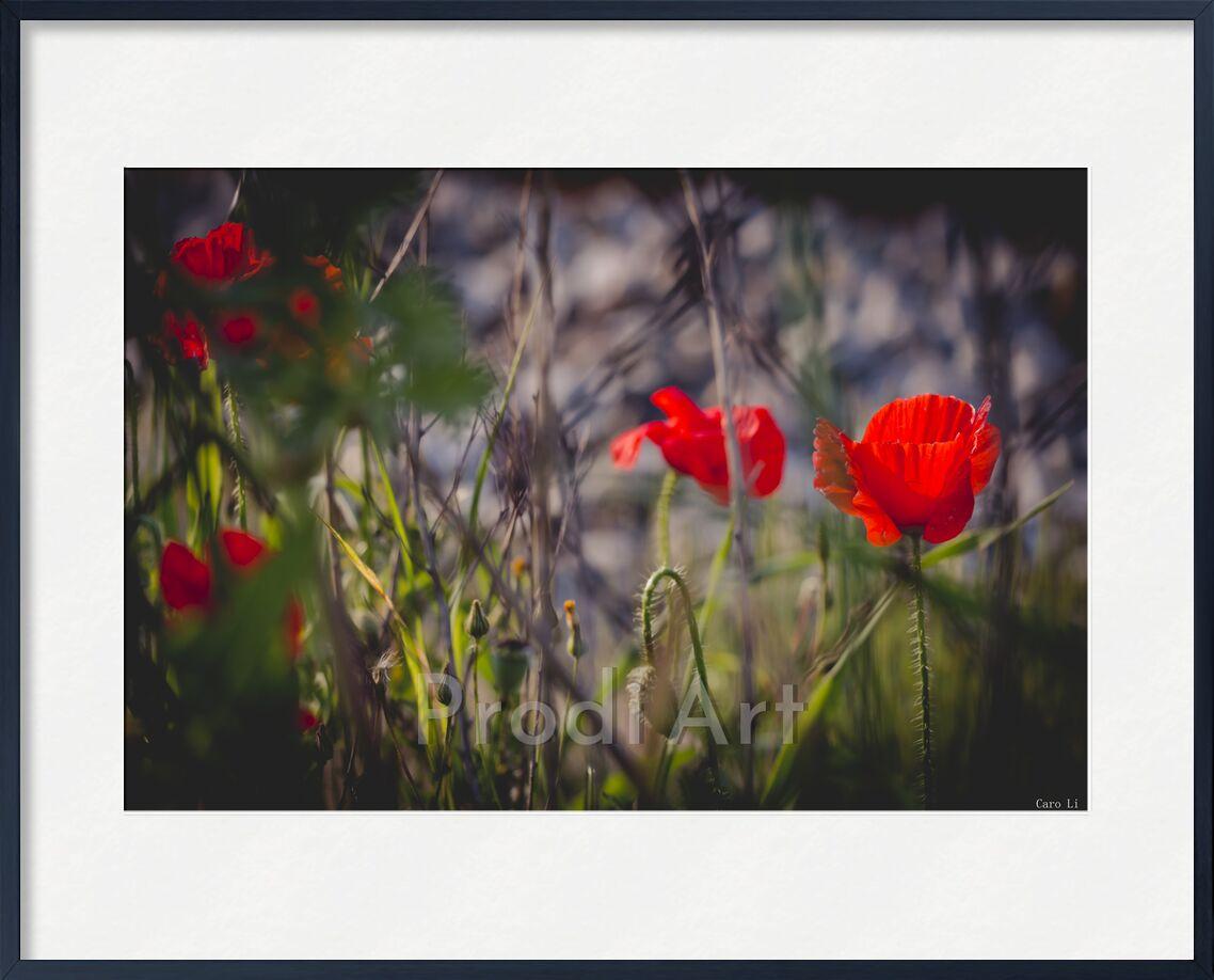 Bouquet de Caro Li, Prodi Art, nature, fleurs, fleurs, tulipe