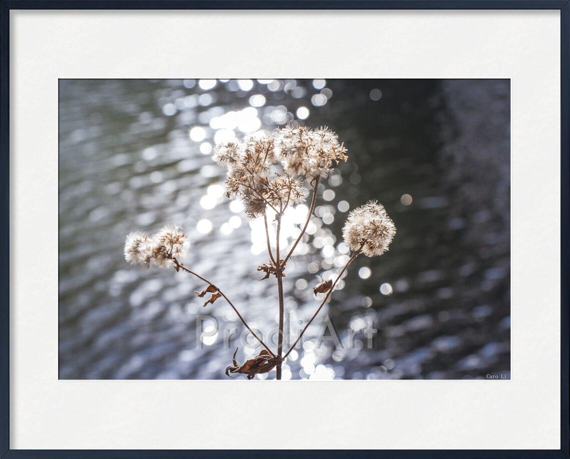 Flowers de Caro Li, Prodi Art, paysage, paysage, eau, fleurs, fleurs