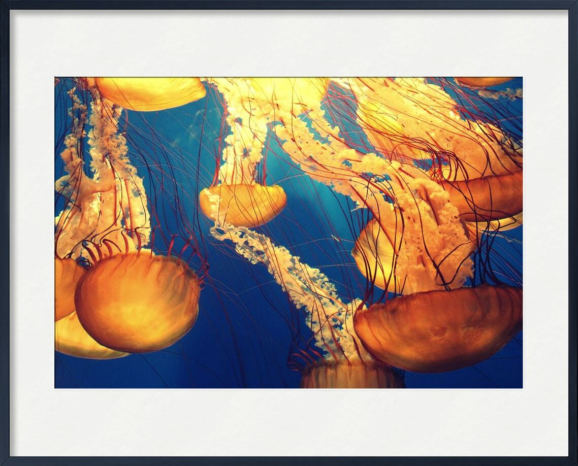 Jellyfish from the Sea from Pierre Gaultier, Prodi Art, animals, deep ocean, deep sea, jellyfishes, marine, life, nature, ocean, sea, sea creature, tentacles, underwater