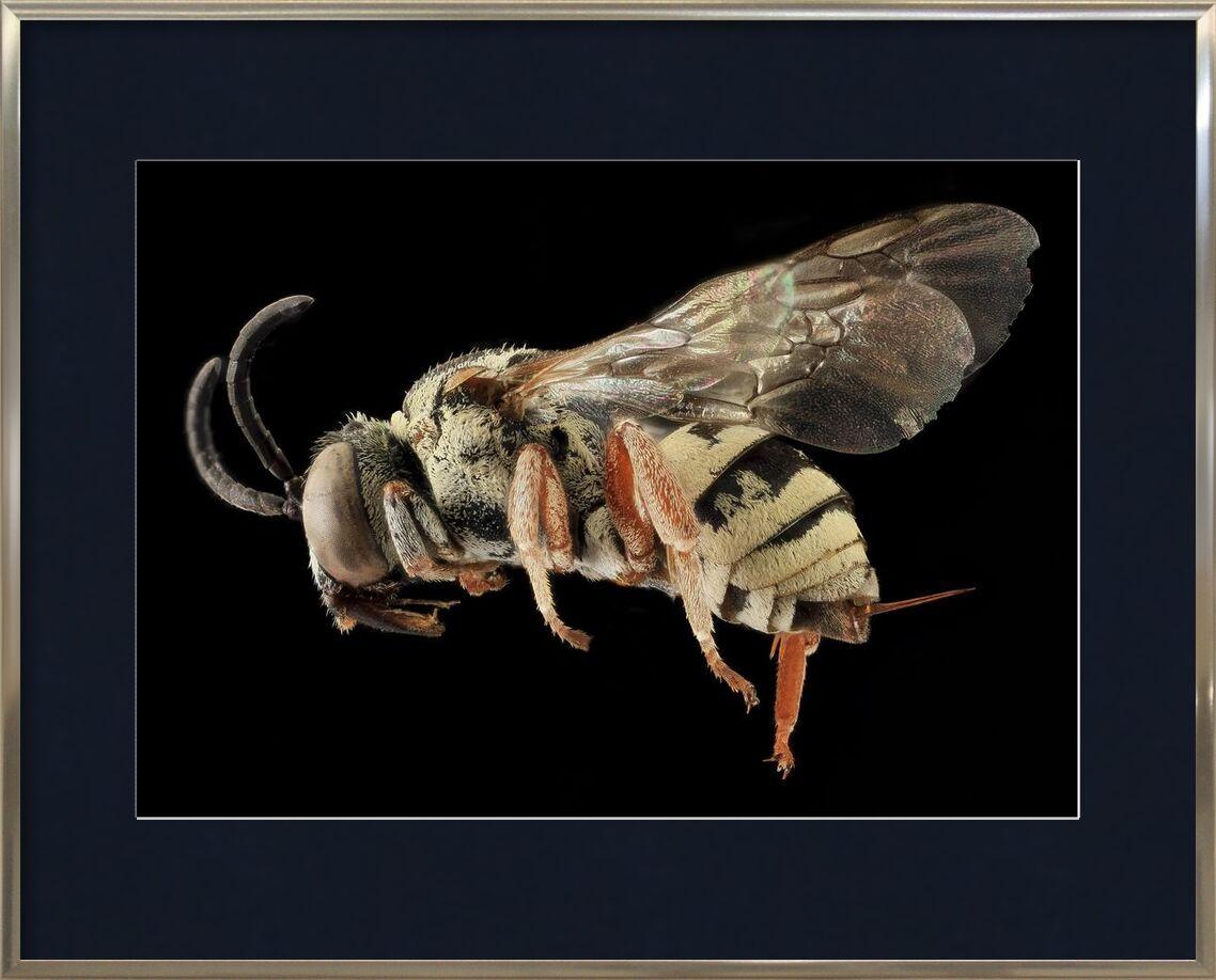 Insecte sur fond noir de Pierre Gaultier, Prodi Art, ailes, faune, profil, nature, monté, macro, insecte, mouche, minimus, epeol, fermer, abeille