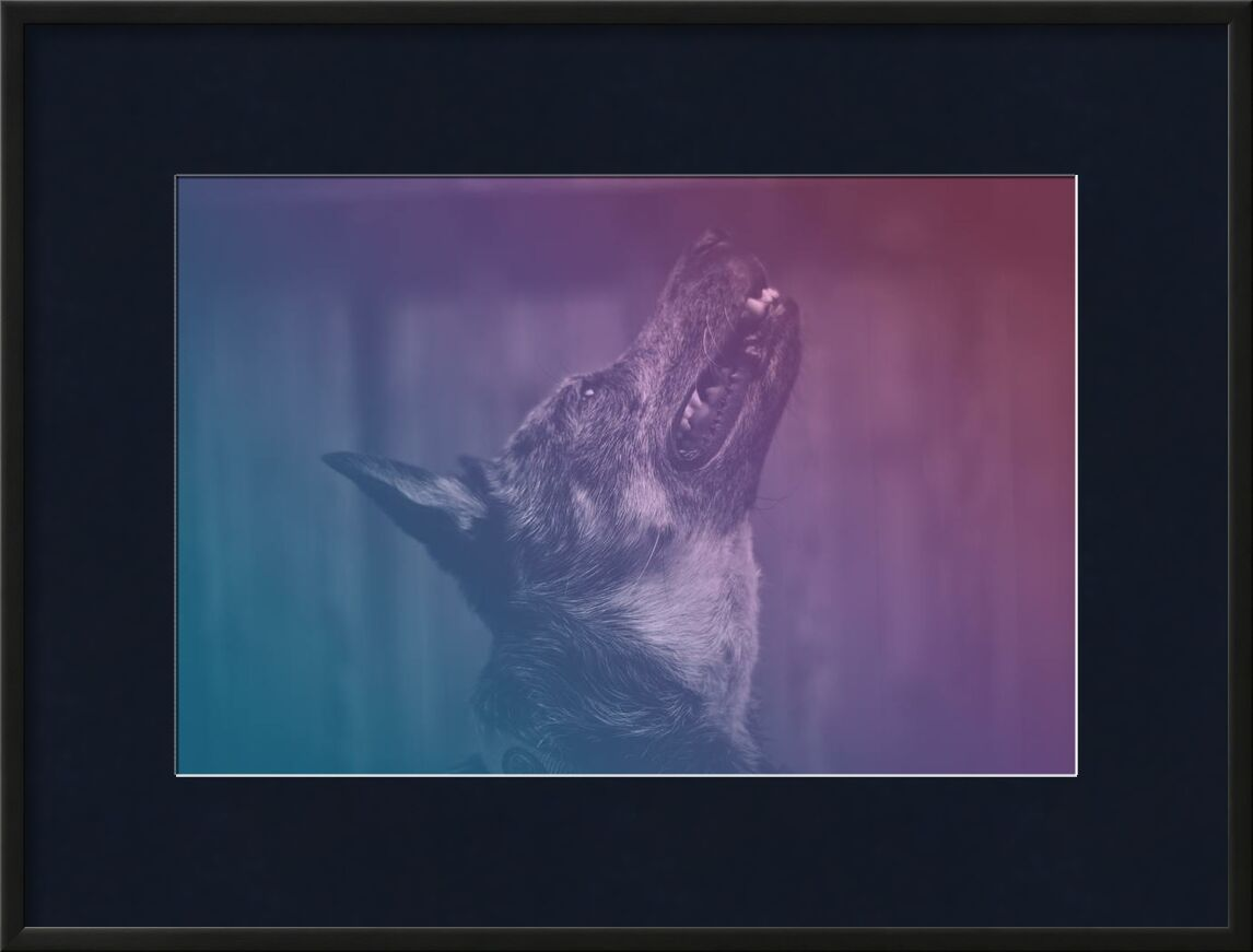 Délivrance de Aliss ART, Prodi Art, en levant, hurler, animal domestique, moustaches, animal de compagnie, mammifère, fourrure, concentrer, filtre, chien, gros plan, canin, photographie animale, animal