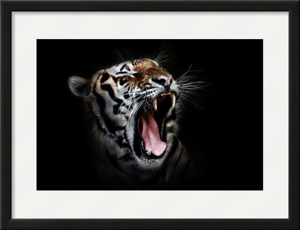 Férocité from Aliss ART, Prodi Art, animal, animal photography, big cat, close-up, tiger, wildlife, wild cat