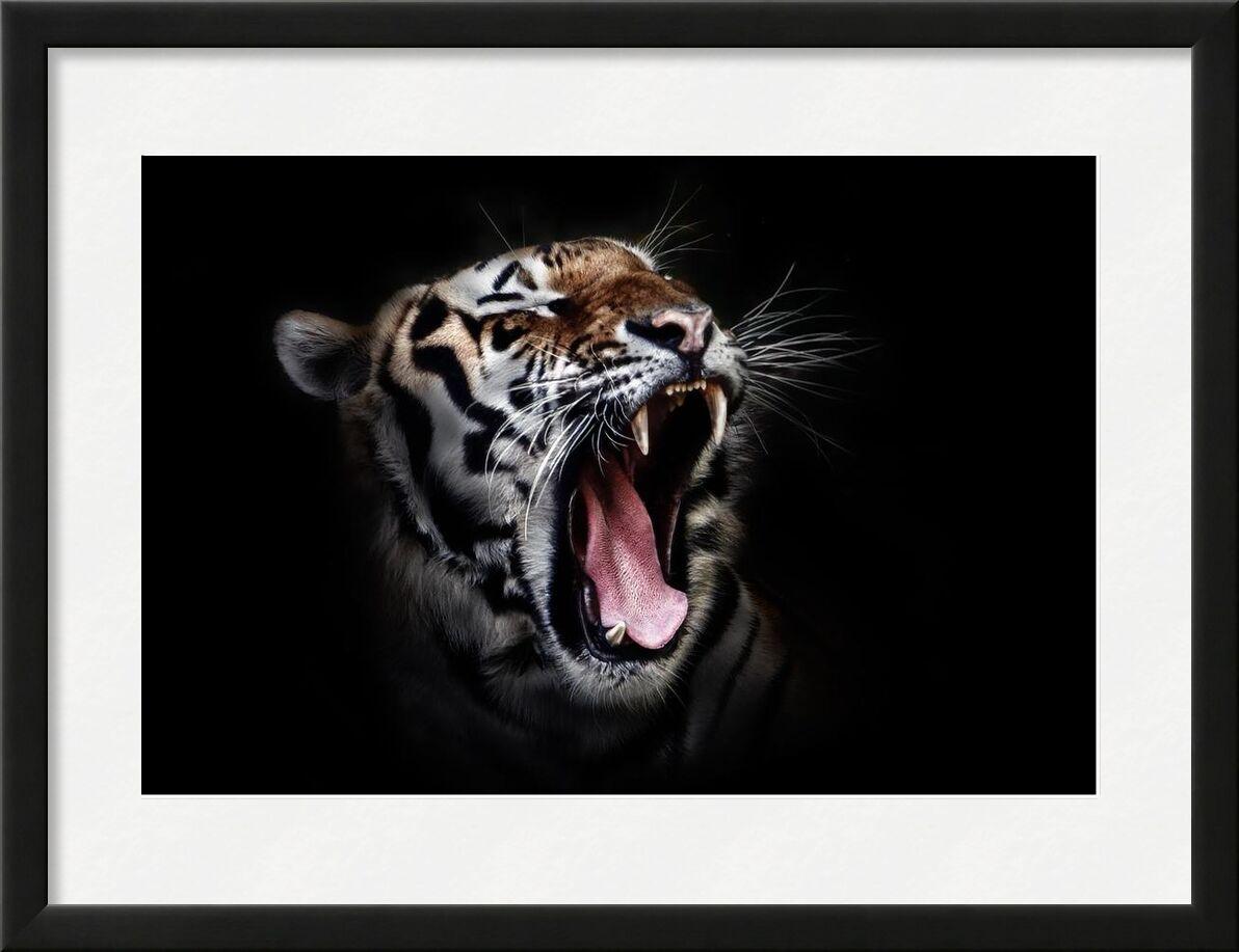 Ferocity from Aliss ART, Prodi Art, wild cat, wildlife, tiger, close-up, big cat, animal photography, animal