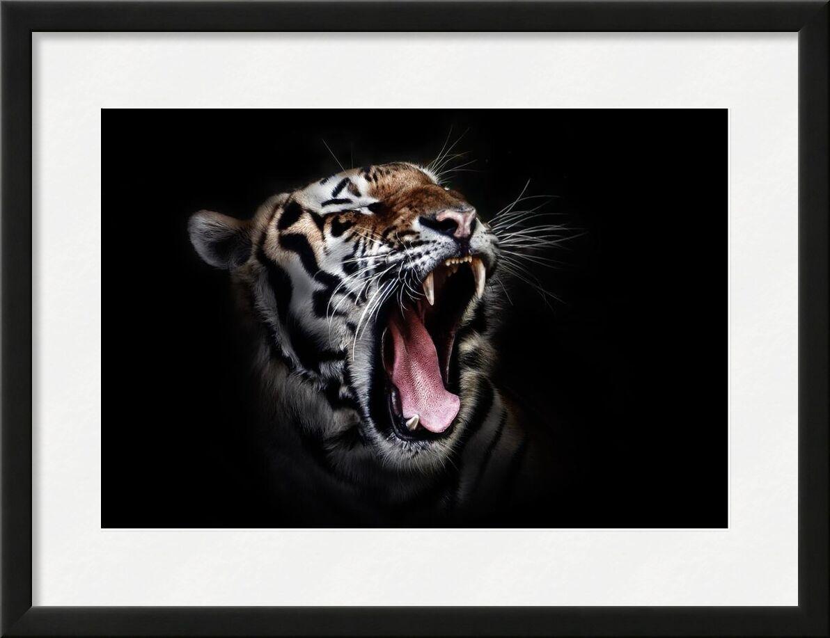 Ferocity from Aliss ART, Prodi Art, animal, animal photography, big cat, close-up, tiger, wildlife, wild cat