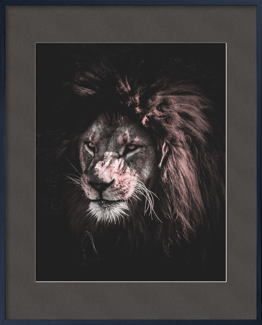 Roi de la nature from Aliss ART, Prodi Art, animal, animal photography, big, big cat, carnivore, close-up, danger, dangerous, eyes, felidae, feline, fur, head, hunter, Lion, mammal, outdoors, predator, rocks, staring, whiskers, wild, wild animal, wildlife, zoo, king of the jungle, mouth, stare