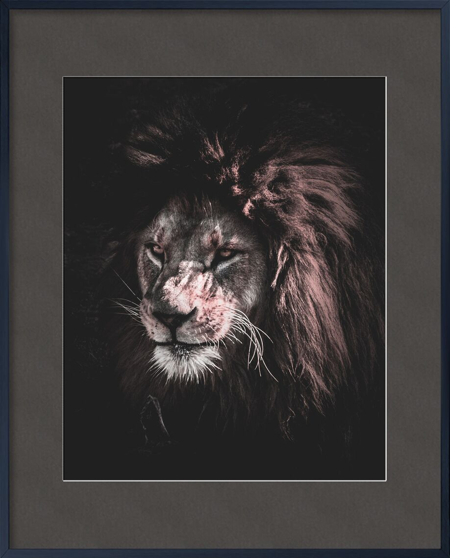 King of nature from Aliss ART, Prodi Art, stare, stuffy, king of the jungle, zoo, wildlife, wild animal, wild, whiskers, staring, rocks, predator, outdoors, mammal, Lion, hunter, head, fur, feline, felidae, eyes, dangerous, danger, close-up, carnivore, big cat, big, animal photography, animal