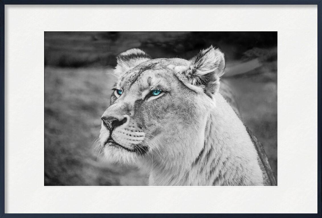 Regard percant de Aliss ART, Prodi Art, lionne, fermer, faune, animal sauvage, sauvage, moustaches, prédateur, mammifère, chasseur, tête, fourrure, félin, félidés, visage, les yeux, en voie de disparition, défocalisé, dangereux, carnivore, fond flou, noir et blanc, gros chat, gros, photographie animale, animal