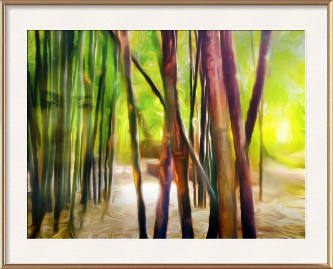Derrière les bambous de Adam da Silva, Prodi Art, forêt, lumière, vert, marron, visage, femme, bambous, bambouseraie, sable