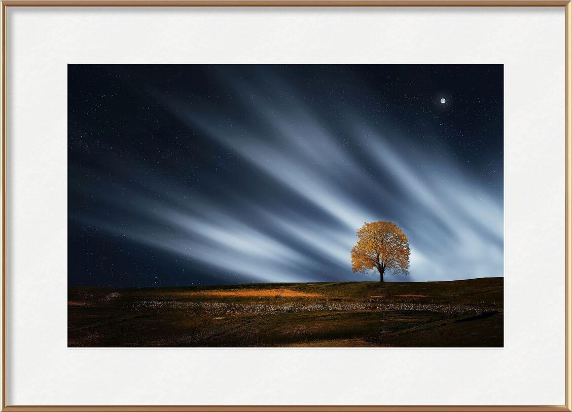 The night tree from Pierre Gaultier, Prodi Art, outdoor, nature, environment, scenic, scenery, Moon, calm, landscape, evening, night, peaceful, tree, scene, lone, breathtaking, serene, stars