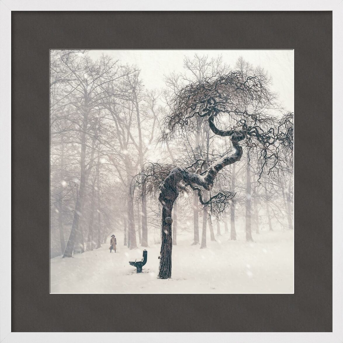 Résistance from Aliss ART, Prodi Art, cold, foggy, forest, freezing, frosty, frozen, icy, landscape, fog, nature, person, snow, snowy, trees, weather, winter, bench, branches, dark, snowstorm, woods