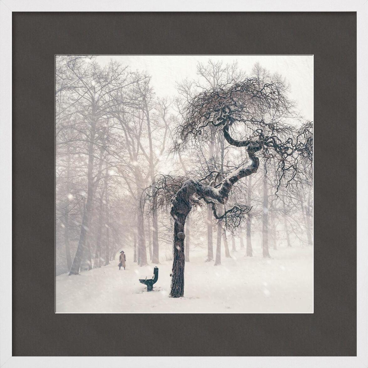 Résistance de Aliss ART, Prodi Art, les bois, tempête de neige, sombre, branches, banc, hiver, Météo, des arbres, neigeux, neige, la personne, nature, brouillard, paysage, glacé, congelé, glacial, gel, forêt, brumeux, du froid