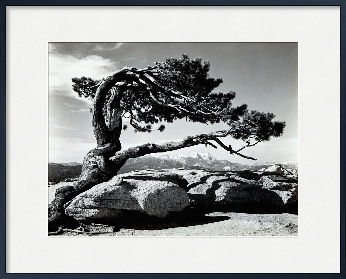 Jeffrey Pine, Sentinel Dome - ANSEL ADAMS 1940 from AUX BEAUX-ARTS, Prodi Art, ANSEL ADAMS, black-and-white, rock, mountains, tree, pin, clouds