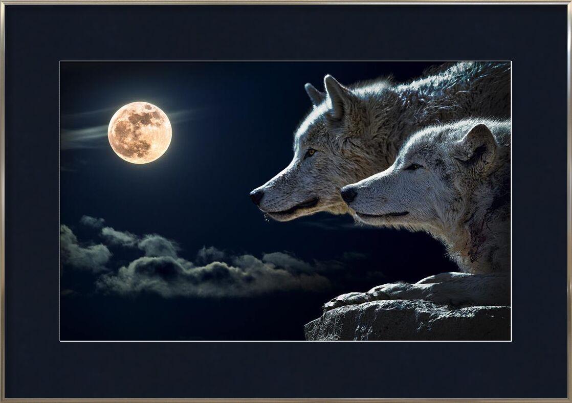 Les gardiens de la nuit de Aliss ART, Prodi Art, canin, canidés, loups, animal sauvage, ciel, Roche, nuit, nature, clair de lune, lune, fourrure, pleine lune, soir, nuages, gros plan, photographie animale, animal