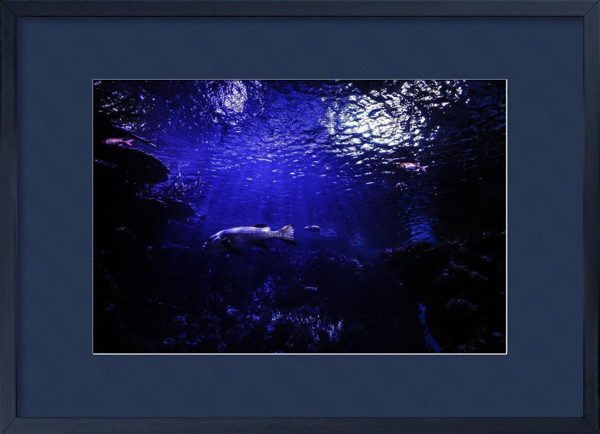 Le monde bleu from Aliss ART, Prodi Art, aquarium, water, underwater, sea, pond, ocean, lake, fish, deep, dark, animal