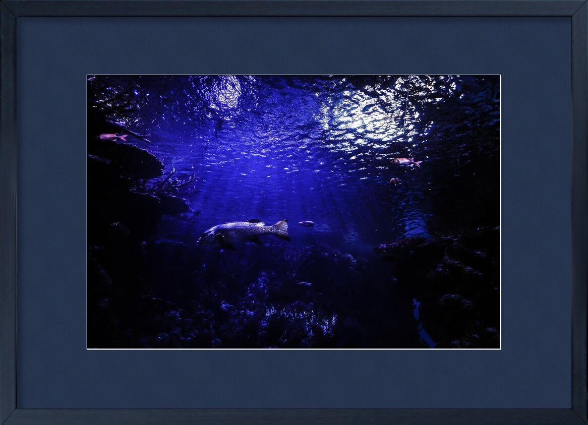 Le monde bleu de Aliss ART, Prodi Art, aquarium, eau, sous-marin, mer, étang, océan, Lac, poisson, Profond, foncé, animal