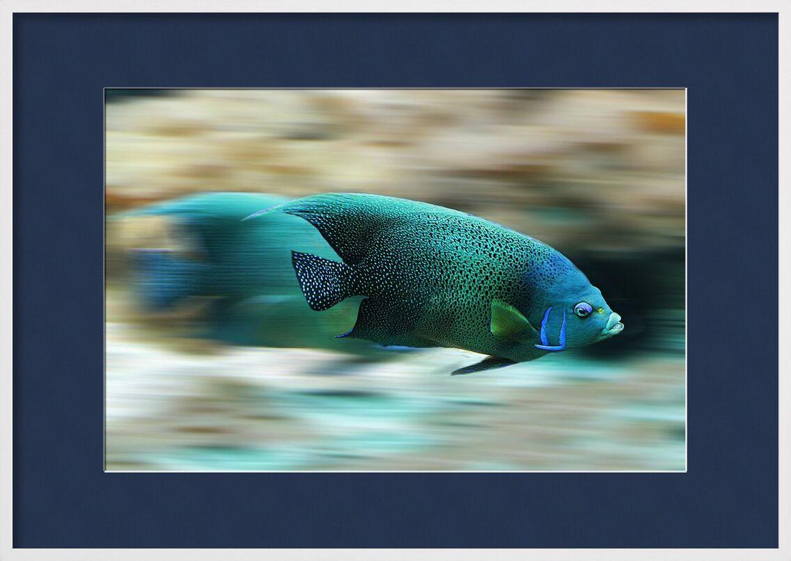 L'ombre colorée de Aliss ART, Prodi Art, poisson, Marin, La vie marine, mouvement, nature, la vitesse, nager, eau, aqua, aquatique, échelle, laps de temps