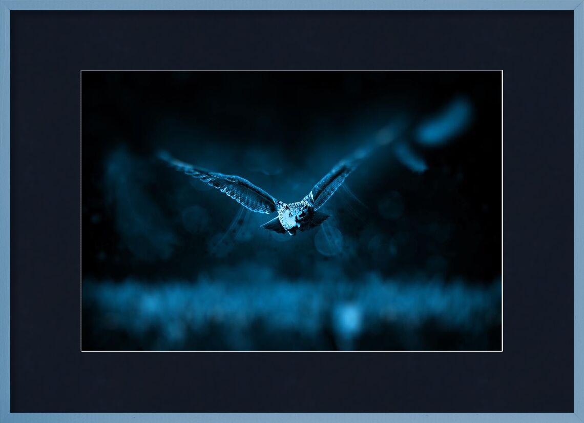 بومة from Aliss ART, Prodi Art, animal, bird, dark, fly, night, owl, wild animal