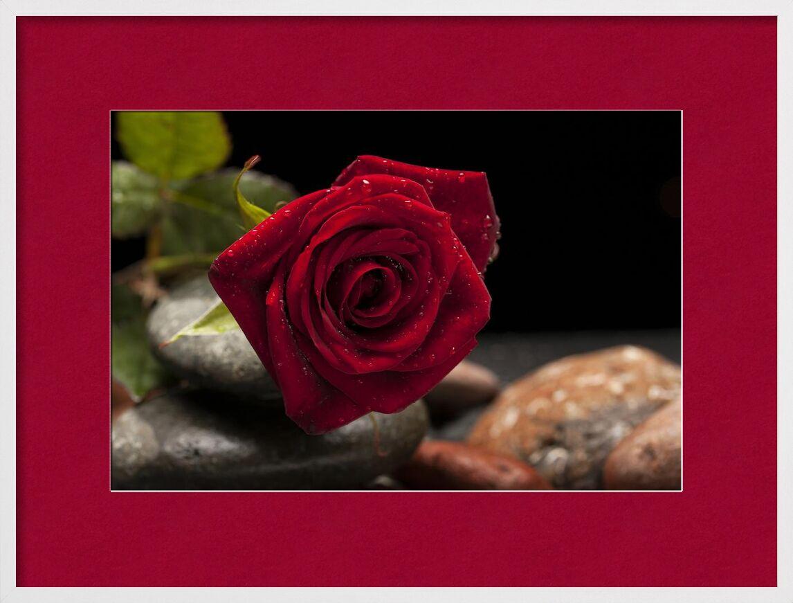 Pardon mon amour from Aliss ART, Prodi Art, bloom, blooming, flower, blur, close-up, delicate, depth of field, dew, flora, focus, leaves, macro, petals, rocks, pink