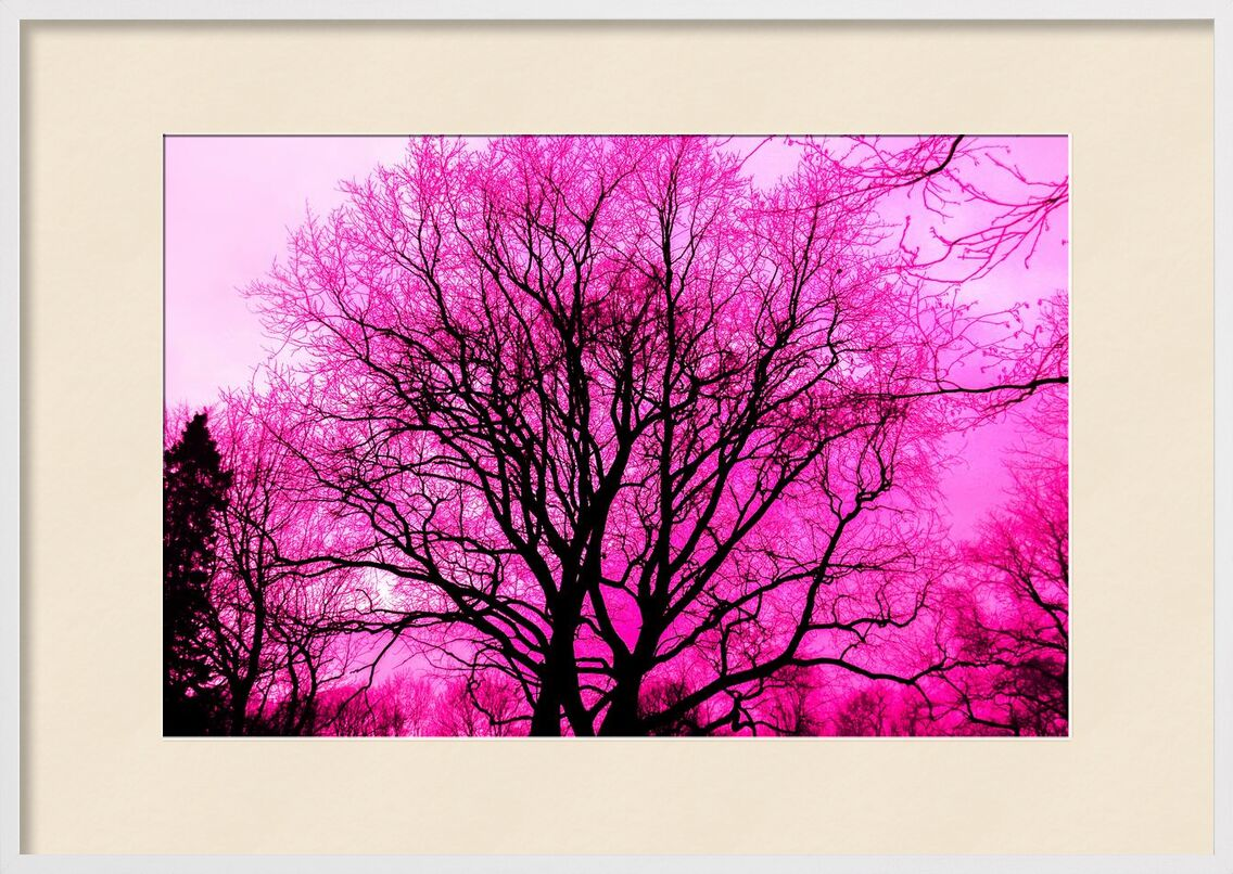 Life in pink from Aliss ART, Prodi Art, abstract, art, black, branch, bright, color, dark, dawn, environment, fall, fog, landscape, nature, outdoors, scenic, silhouette, Sun, tree, purple, winter, wood, alone, wallpaper