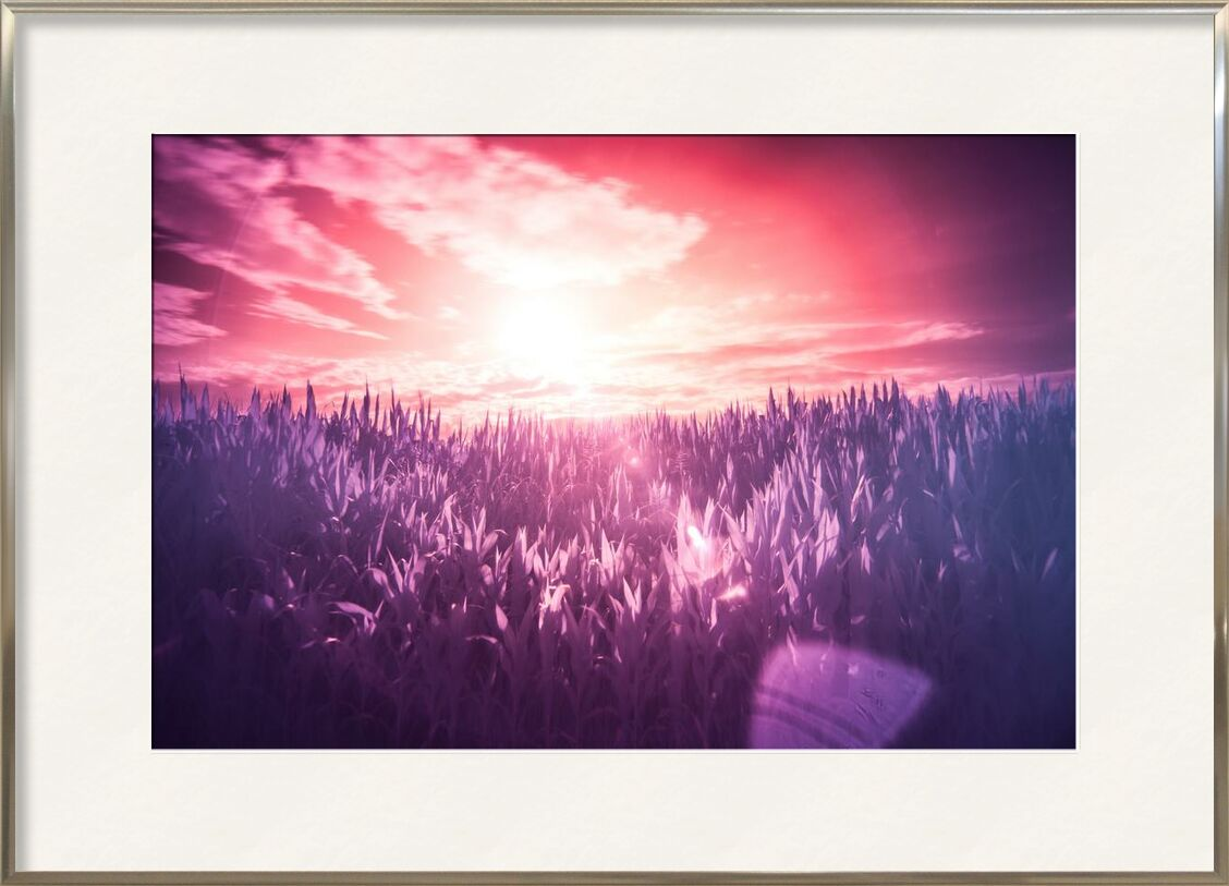 Rêve from Aliss ART, Prodi Art, dream, lilac, meadow, pink, purple, red, Sun, filter, infrared, sunbeams, surreal