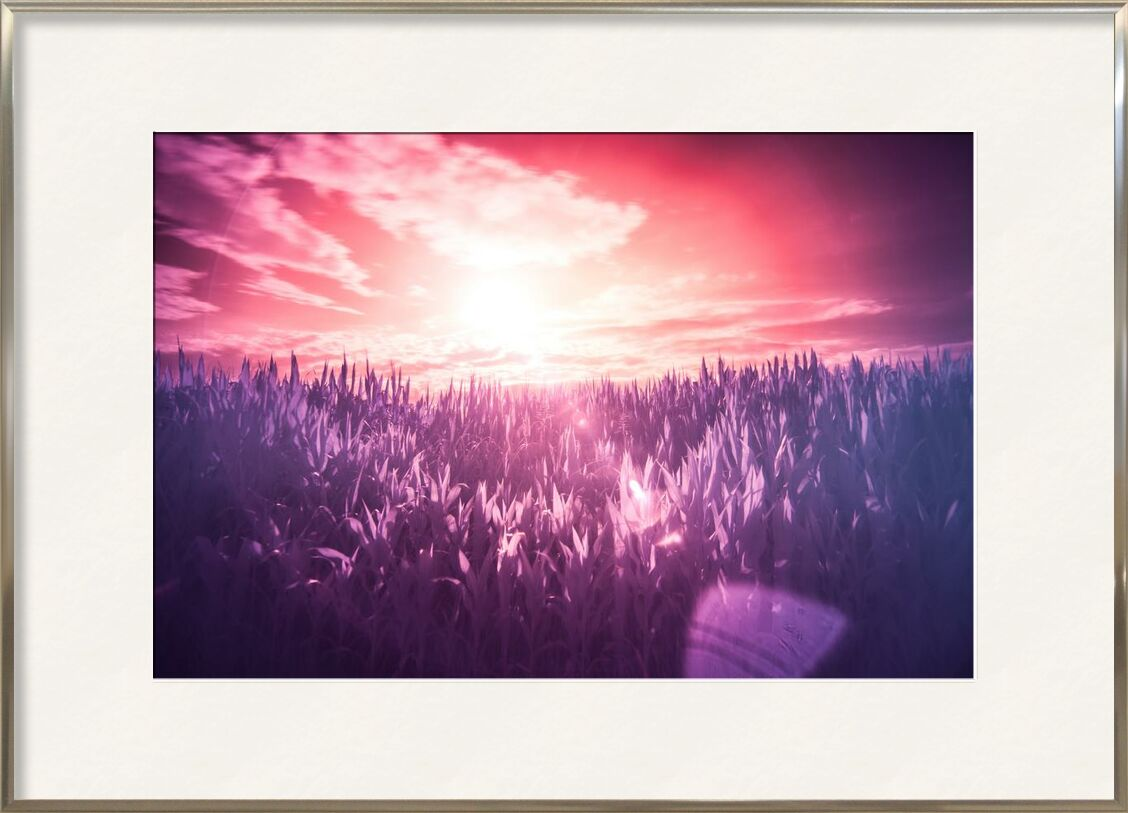 Rêve de Aliss ART, Prodi Art, surréaliste, les rayons du soleil, infrarouge, filtre, soleil, rouge, violet, rose, prairie, lilas, rêver