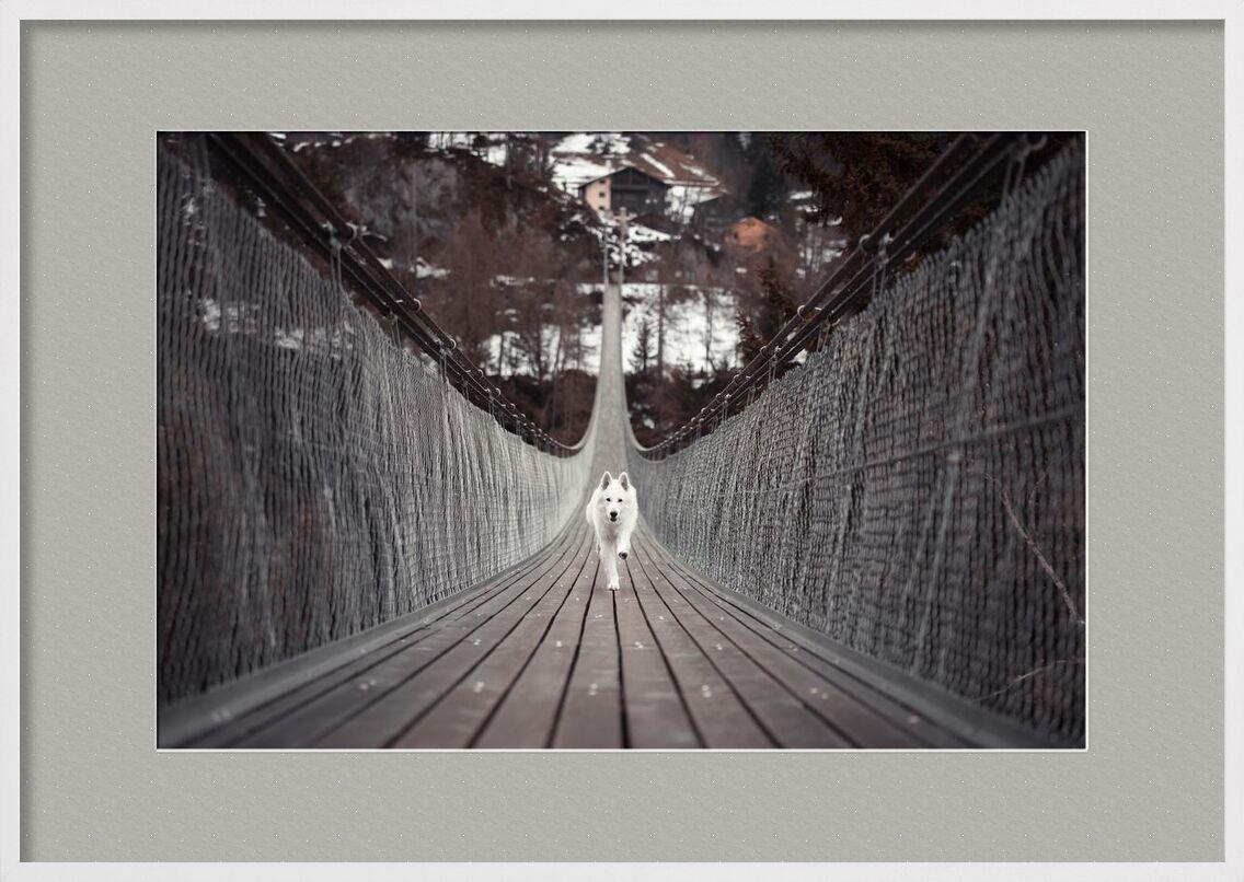Passage de Aliss ART, Prodi Art, animal, architecture, bâtiment, canin, chien, amusement, lumière, ligne, en plein air, animal de compagnie, route, acier, Système de transport, Voyage, bois, pont, construction, courage, traverser, Infrastructure, chien de berger, fils