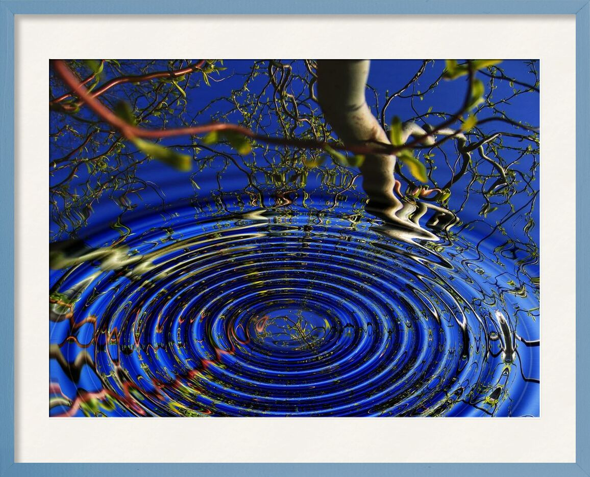 Reflection of trees from Aliss ART, Prodi Art, meditation, center, awareness, water, tree, texture, shape, round, ripple, reflection, pattern, outdoors, motion, mirroring, low angle shot, light reflections, light, design, circle, bright, branches, art, abstract