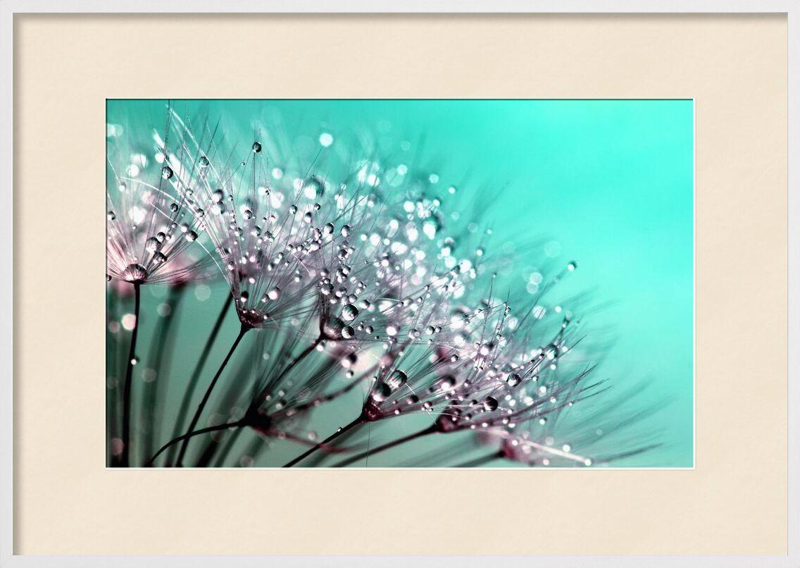 Morning dew from Aliss ART, Prodi Art, raindrops, macro photography, dewdrops, dandelion seeds, blowballs, water drops, nature, macro, flowers, flora, dew, dandelion, close up