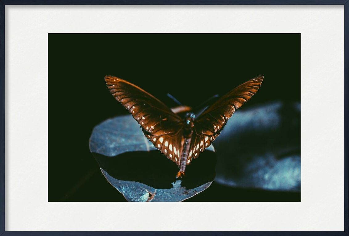 Sombre de Aliss ART, Prodi Art, Srilanka, papillon de nuit, monarque, Lépidoptères, ailes, macro, insecte, foncé, gros plan, papillon