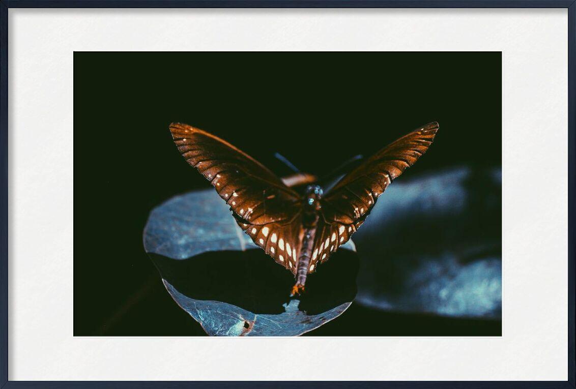 Dark from Aliss ART, Prodi Art, Srilanka, moth, monarch, lepidoptera, wings, macro, insect, dark, close-up, butterfly