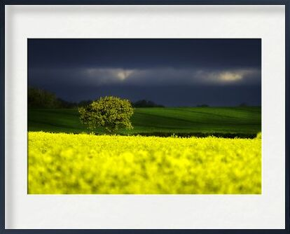 The yellow field from Pierre Gaultier, Prodi Art, Art photography, Framed artwork, Prodi Art