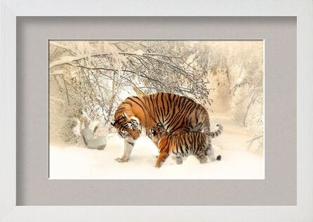 Tigers in the snow from Pierre Gaultier, Prodi Art, Art photography, Framed artwork, Prodi Art