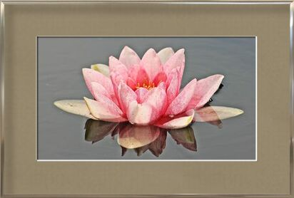 The pink water lily from Pierre Gaultier, Prodi Art, Art photography, Framed artwork, Prodi Art