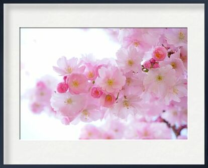Cherry blossoms from Pierre Gaultier, Prodi Art, Art photography, Framed artwork, Prodi Art