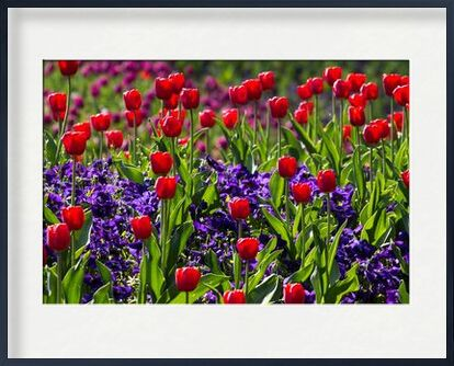 Spring tulips from Pierre Gaultier, Prodi Art, Art photography, Framed artwork, Prodi Art