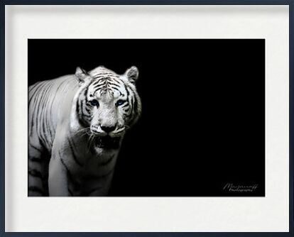 The Siberian Tiger out of the ... from Mayanoff Photography, Prodi Art, Art photography, Framed artwork, Prodi Art