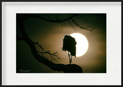 Lunar rest... from Mayanoff Photography, Prodi Art, Art photography, Framed artwork, Prodi Art