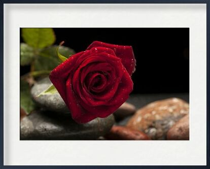 The Red Rose from Pierre Gaultier, Prodi Art, Art photography, Framed artwork, Prodi Art
