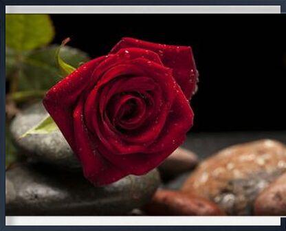 The Red Rose from Pierre Gaultier, Prodi Art, Art photography, Framed artwork, Prodi Art