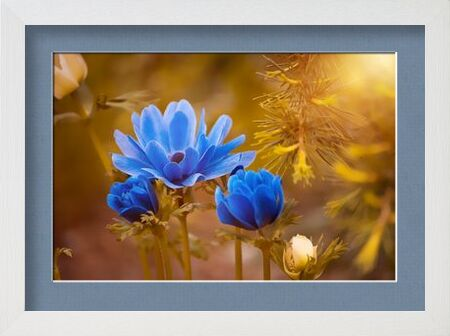 Wild flower from Pierre Gaultier, Prodi Art, Art photography, Framed artwork, Prodi Art