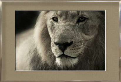 Lion from Pierre Gaultier, VisionArt, Art photography, Framed artwork, Prodi Art