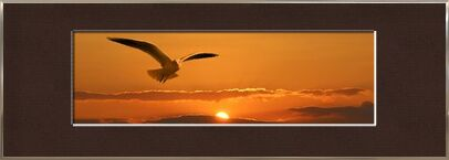 Flight of the seagull from Pierre Gaultier, VisionArt, Art photography, Framed artwork, Prodi Art