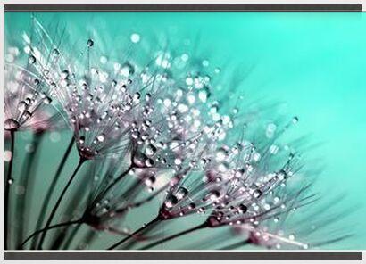 Sensitive rosé from Pierre Gaultier, Prodi Art, Art photography, Framed artwork, Prodi Art