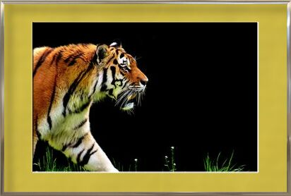 Tiger walking from Pierre Gaultier, VisionArt, Art photography, Framed artwork, Prodi Art