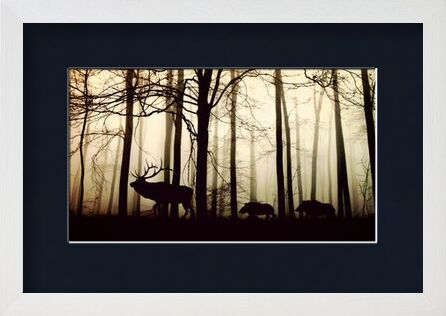 Silhouette of the forest from Pierre Gaultier, VisionArt, Art photography, Framed artwork, Prodi Art
