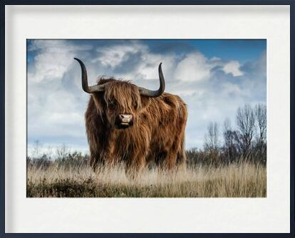 The buffalo meadow from Pierre Gaultier, VisionArt, Art photography, Framed artwork, Prodi Art