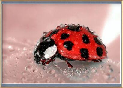 Red Ladybird from Pierre Gaultier, Prodi Art, Art photography, Framed artwork, Prodi Art