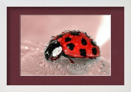 Red Ladybird from Pierre Gaultier, VisionArt, Art photography, Framed artwork, Prodi Art