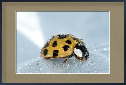Yellow ladybird from Pierre Gaultier, VisionArt, Art photography, Framed artwork, Prodi Art